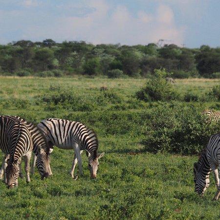 Serowe, Botswana: photo1.jpg