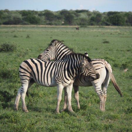 Serowe, Botsvana: photo2.jpg