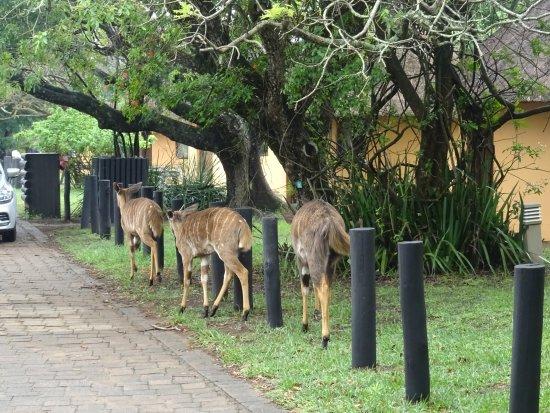 Hluhluwe Game Reserve Photo