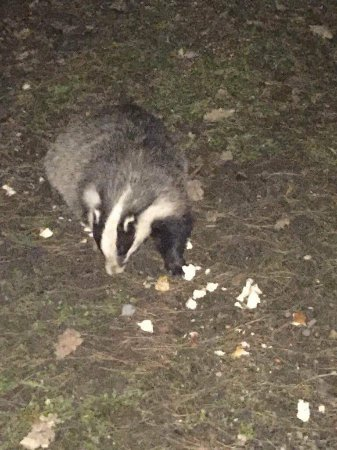 Flaxton, UK: Night time visitor