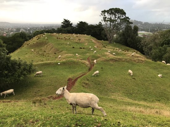 One Tree Hill (Maungakiekie): Sheep Farm