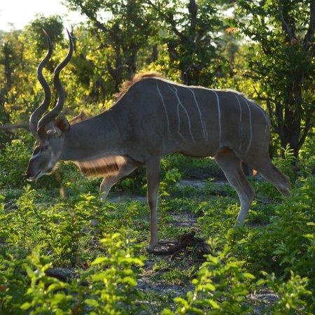 Linyanti Reserve, Botsuana: photo2.jpg