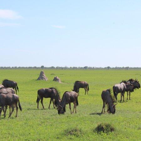 Linyanti Reserve, Μποτσουάνα: photo4.jpg