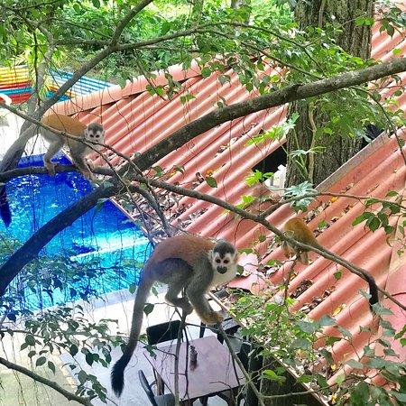 Jungle Beach Hotel at Manuel Antonio: photo1.jpg
