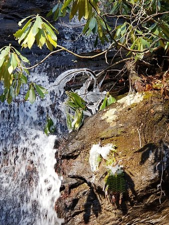 Smithgall Woods Conservation Area ภาพถ่าย
