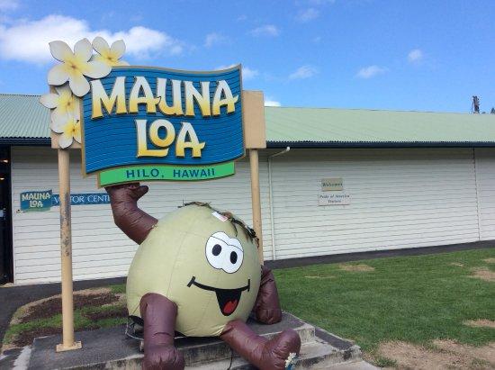 Ookala, Hawaje: Mauna Loa Macadamia Nut Factory