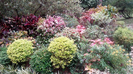 Royal Botanical Gardens: Красота