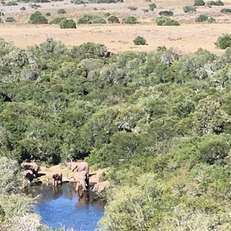 Amakhala Game Reserve, South Africa: photo0.jpg