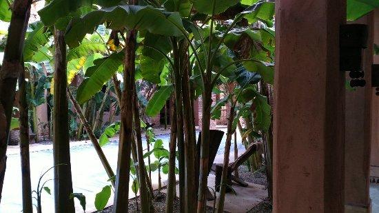 Tigmiza - Suites & Pavillons : IMG_20180115_133908_BURST1_large.jpg