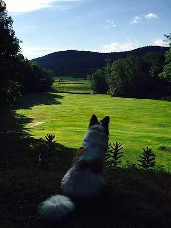Springfield Center, NY: View From the 6th Tee, shared with BB the course dog.