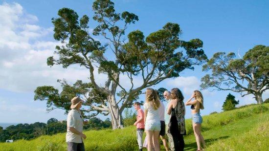 Остров Уаихеке, Новая Зеландия: Bush walking with Simon