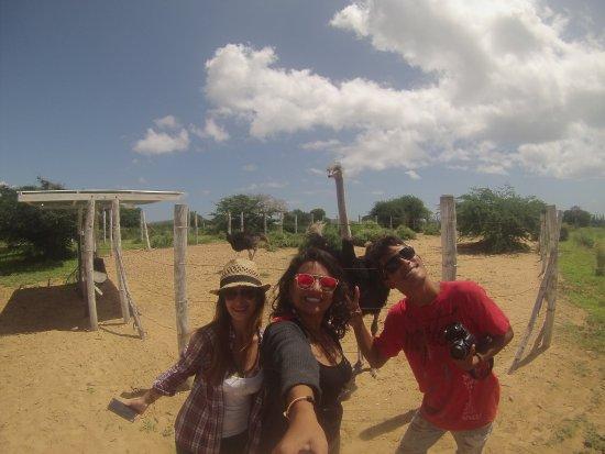 Hacienda Macanao: Con el avestrus