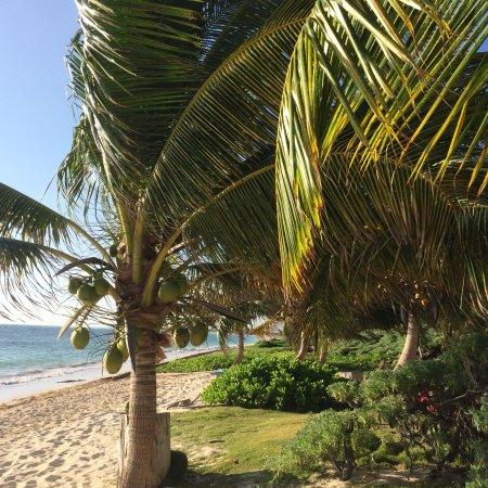 Mayan Beach Garden: photo0.jpg