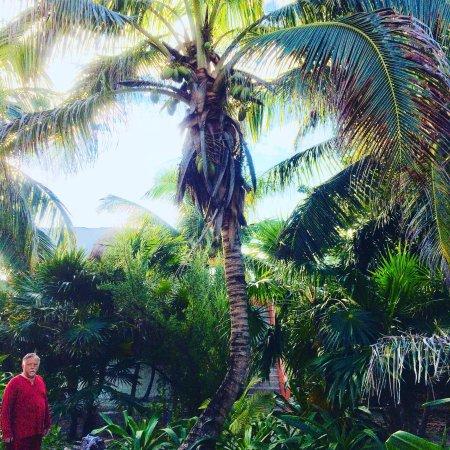 Mayan Beach Garden: photo2.jpg