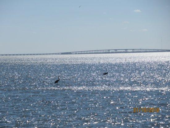 Bridge across Laguna Madre - Picture of Laguna Madre Nature