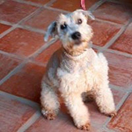 Mascota, Mexico: Ahora puedes viajar con importantes miembros de la familia