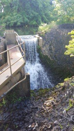 Mena Creek, Australia: Paronella park water falls