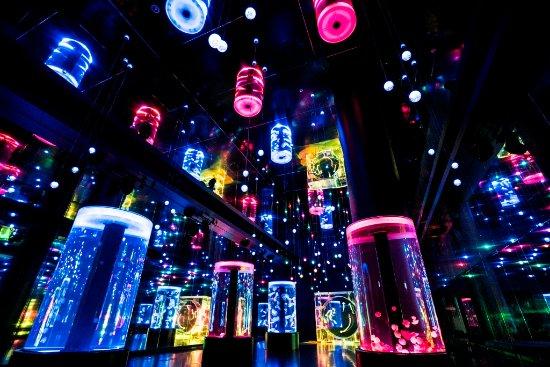 Minato, Japan: Jellyfish Ramble(ジェリーフィッシュランブル):音と光の演出につつまれた、幅約9m×奥行き約35mのクラゲ展示の大空間。季節限定のプログラムもあります。