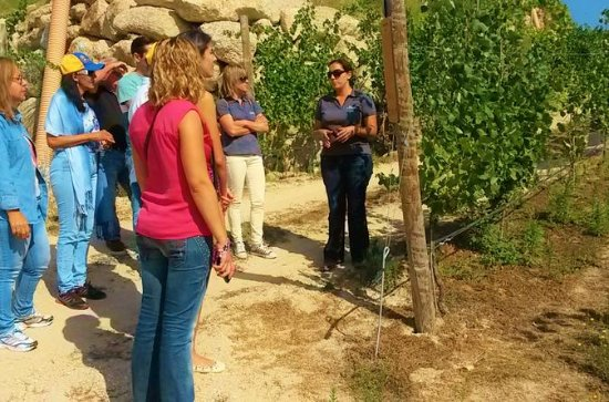 Wine Tour and Tasting at Quinta de...