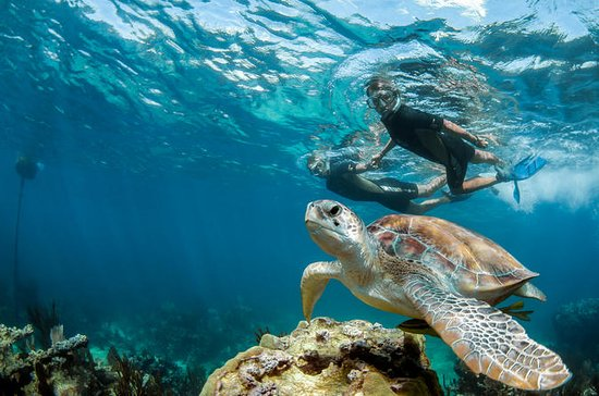 Private Tour Turtle Experience und ...