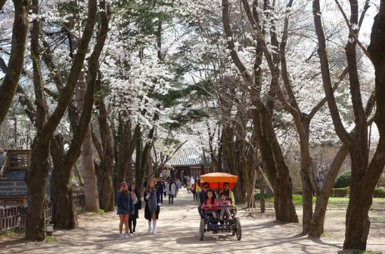 Day Trip to Nami Island and Everland ...