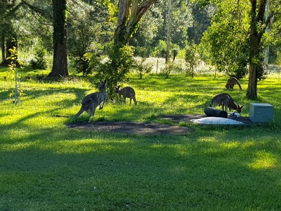 Woodburn, Australie : 20180105_175539_large.jpg