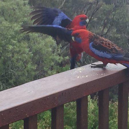Wentworth Falls, Australien: photo3.jpg