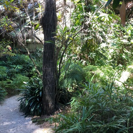 Adelaide Botanic Garden: photo7.jpg