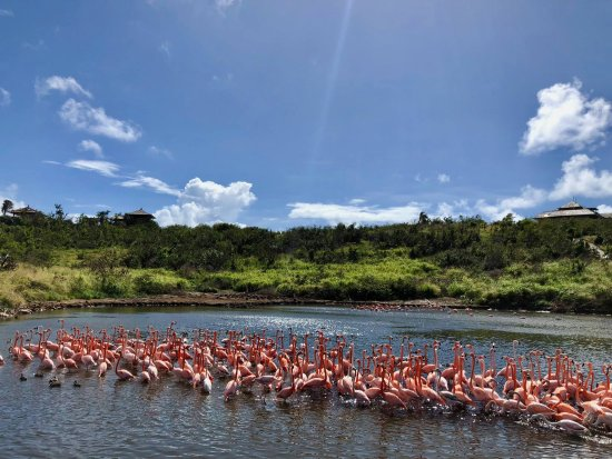 North Sound, Virgin Gorda: Flamingos
