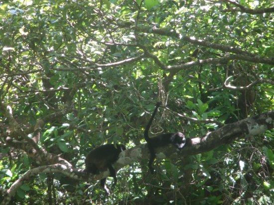 Artola, كوستاريكا: monkeys along the way