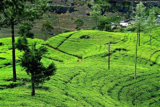 Katunayake, Σρι Λάνκα: getlstd_property_photo