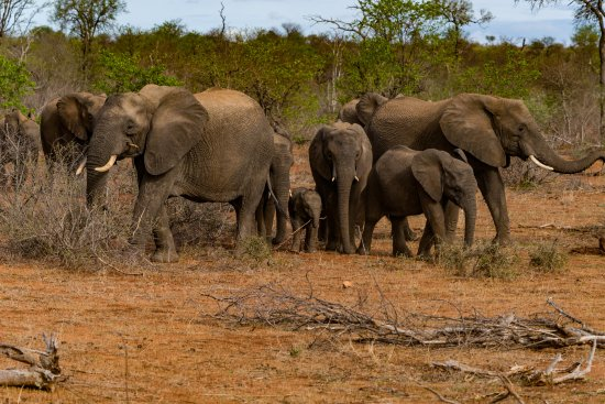 Timbavati Private Nature Reserve, South Africa: game-drive