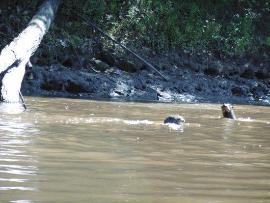 Loreto Region, Peru: Fotos captadas en la reserva nacional pacaya samiria - full aventura - full naturaleza