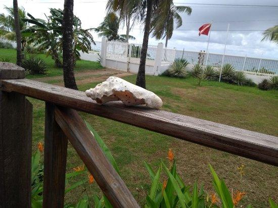 Playa Tranquilo: Vista da Varanda