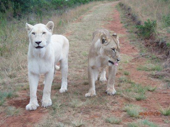 Zorgfontein Game Farm Photo