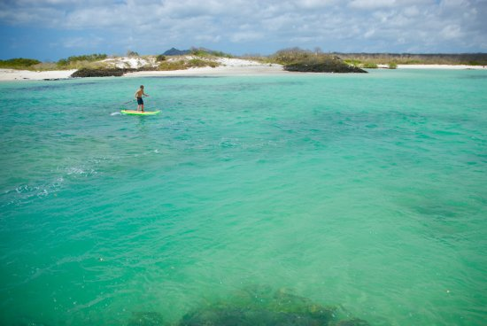 Casa Opuntia Galapagos: this guys know how to take care of their guest and have great tours try the SUP & Snorkeling tou