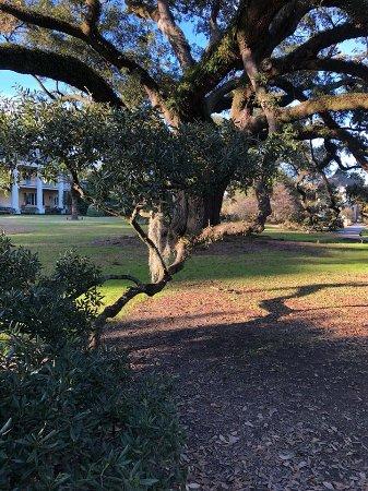Darrow, LA: Burnside Oak at Houmas House