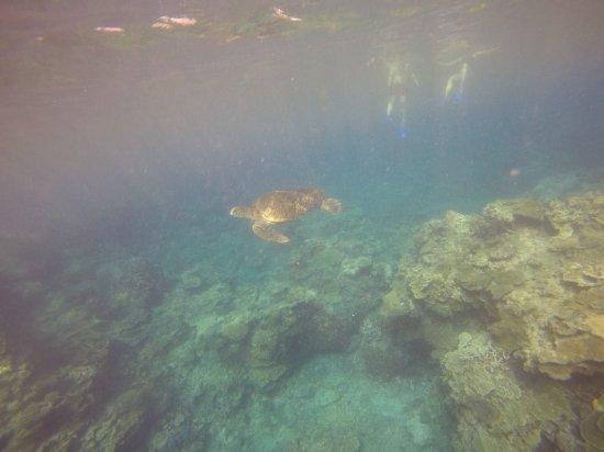 Lady Elliot Island, Austrália: GOPR1150_1513329251051_high_large.jpg