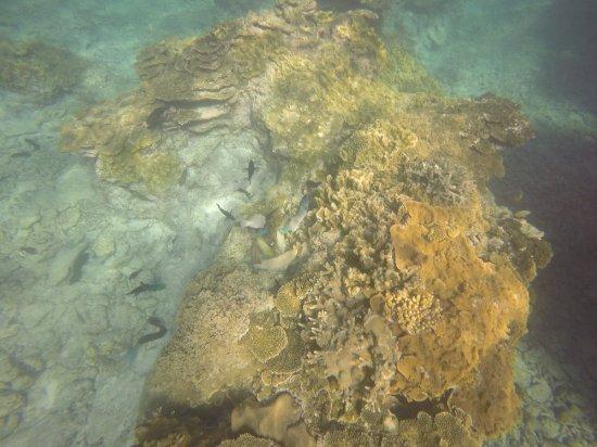 Lady Elliot Island, Austrália: GOPR1159_1513329251051_high_large.jpg