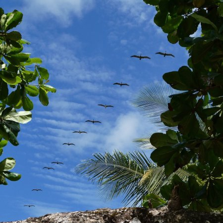 Sierpe, Κόστα Ρίκα: photo9.jpg