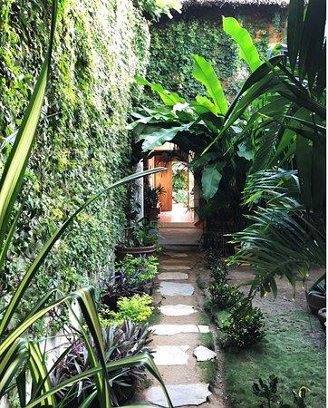 Zipolite, Μεξικό: Our beautiful garden.