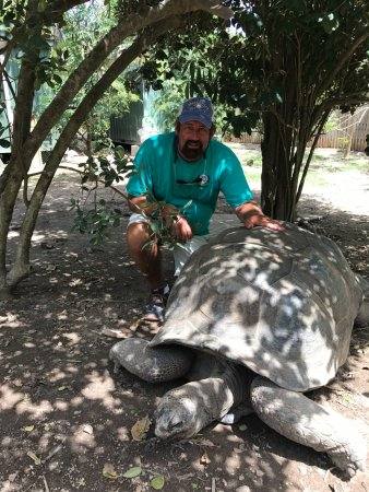 North Sound, Virgen Gorda: Aldabra Tortoise are amazing!