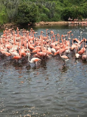 North Sound, Virgen Gorda: Flamingoes, flamingoes, flamingoes!!