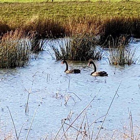 Neerim South Wetlands