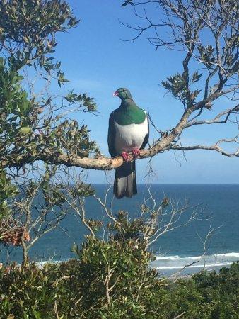 The Catlins, New Zealand: Tui