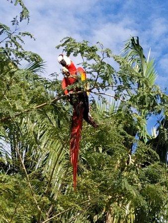 El Remanso Lodge : A scarlet macaw