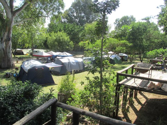 Bonnievale, Sydafrika: Happy, sociable, well behaved campers