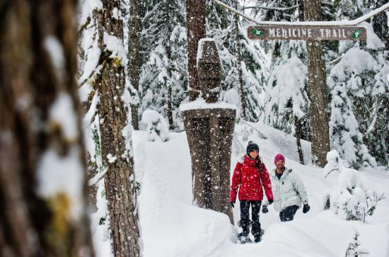Whistler Snowshoe Aventure