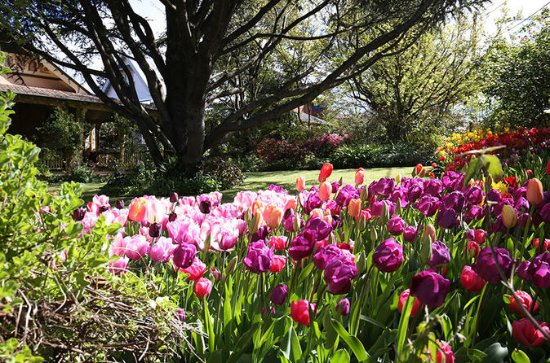 Spring Gardens in the Blue Mountains...