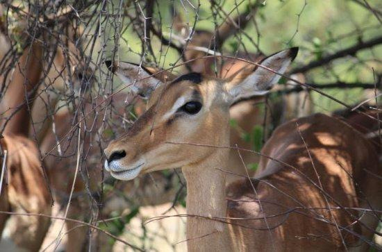 Kruger National Park 2 Days 1 Night...